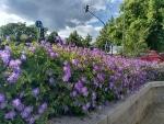 Blumen (mit Auto-HDR)