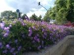 Blumen (ohne HDR)